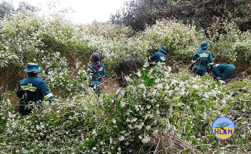 HLEM workers waging war against a forest of chromolaena odorata