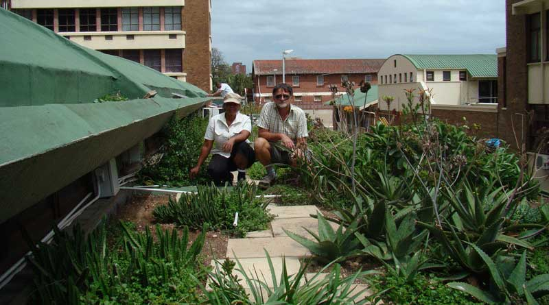 greenroof project durban