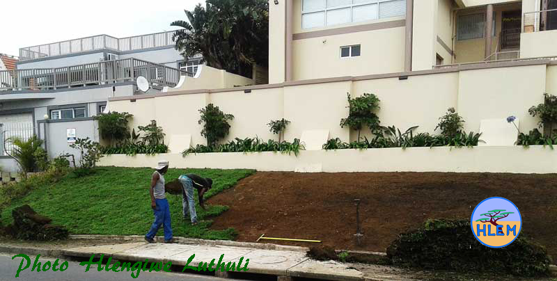 Busy laying Living Earth Berea Grass Dactycloctenium australe instant lawn sod HLEM Hlengiwe Luthuli Environmental Management (Pty) Ltd KZN Durban South Africa